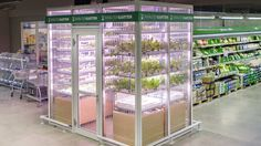 German shoppers now have the chance to buy fresh greens and herbs in supermarkets with tiny vertical farms which both grow and display the produce.
