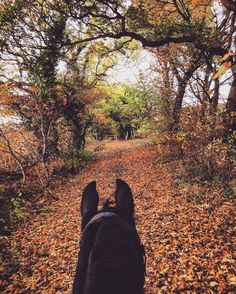 Trail ride in the fall - my favorite view is from the back of a horse.