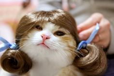 cosplay,cat,munchikin,kiku,wig