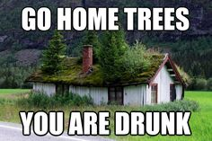 trees on roof