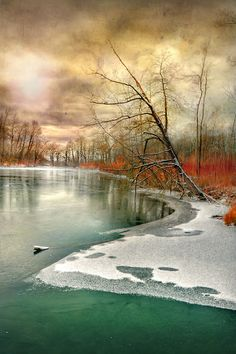 Lake with icy and snowy edges; bare trees; beautiful water Lake Cold Line by Jean-Michel Priaux