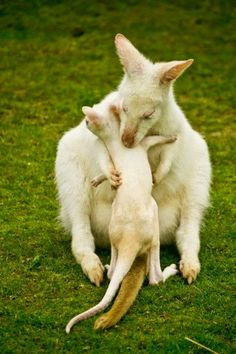 Hugs - wild baby animals