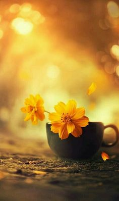 59 Ideas wallpaper yellow flowers backgrounds for 2019 Exotic Flowers, Yellow Flowers, Beautiful Flowers, Flower Wallpaper, Wallpaper Backgrounds, Belle Photo, Pretty Pictures, Cute Wallpapers, Floral Wallpapers