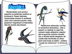 Romanian Language, Baby Education, Kindergarten Activities, Presentation, Childhood, Movie Posters, Google, Biology, Pre K