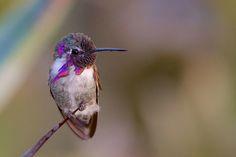20 Beautiful Close-up Photographs of Hummingbirds | Blaze Press