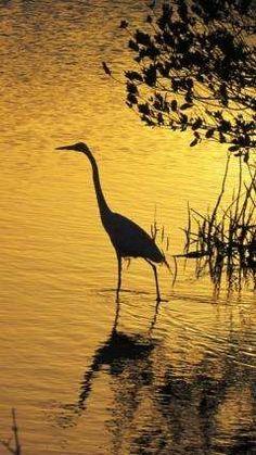 Merritt Island National Wildlife Preserve