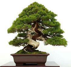 Bonsai Art, Bonsai Plants, Bonsai Garden, Aquarium Landscape, Juniper Bonsai, Bonsai Styles, Mini Bonsai, Art Asiatique, What A Beautiful World