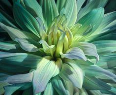 flores-para-pintar-al-oleo+(4).jpg (936×768)