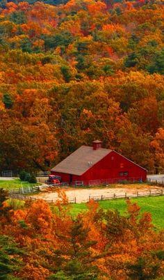 Autumn orange / Ahhh-Mazing!