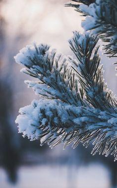 Wallpaper winter branch snow - Wallpapers HD