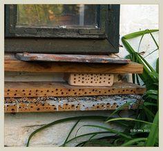garten Sch - detail insektenhotel fertiger teil 2011-05 | Flickr - Photo Sharing!