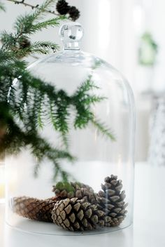 Pine cones under a cloche creates a simple natural Christmas and Winter display.