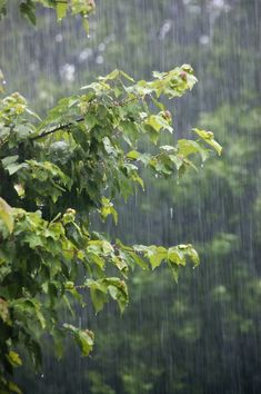 there is something so beckoning in the feel, scent and beauty of a warm Summer rain