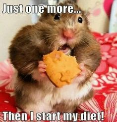 fitness humor, diet, cookies- How many of us have said this before? I know I have!