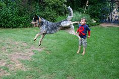 22 Pictures of Flying Dogs