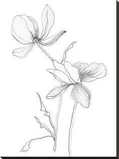 size: Stretched Canvas Print: From My Garden II by Sandra Jacobs : Entertainment Using advanced technology, we print the image directly onto canvas, stretch it onto support bars, and finish it with hand-painted edges and a protective coating. Flower Line Drawings, Botanical Line Drawing, Botanical Drawings, Botanical Art, Art Drawings, Art And Illustration, Illustrations, Plant Drawing, Painting Edges