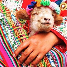 Happy Lamb! Photo Credit : Unknown TAG #expatoutlet in your amazing outdoor adventures! Online store opens in September 2015. Join our mailing list or like our Facebook page for upcoming news about our opening. #expat #expat life #nomad #expatliving #nomadlife #travel #backpacker #fashionista #oftd #fashiongram #travelinstyle #followme #follows #follow #happy #happiness