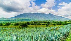 Volcán El Ceboruco en Jala Nayarit México.