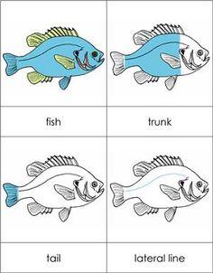 Parts of a fish.