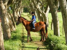 Horse riding is available at Mabuda, beginners welcome. Horse Riding, The Incredibles, Horses, Animals, Animales, Animaux, Animal, Animais, Horse