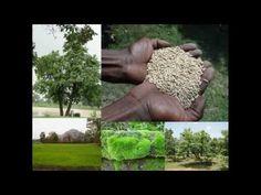 Medicinal Rice B4 Formulations for Memory Loss: Pankaj Oudhia's Medicina...