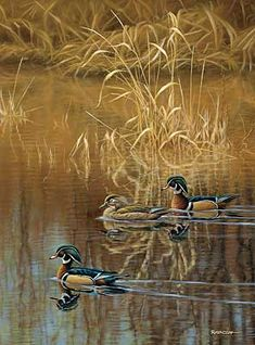 """Spring Creek Woodies - Wood Ducks"" by Jim Rataczak"