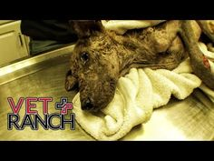 Dying Dog Is Almost Unrecognizable After His Amazing Recovery