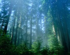 If you have a vacation coming up, you may want to take a trip down to Redwood National Park. At Redwood National, you have activities and sights to keep you occupied. There is never a dull moment at Redwood National Park California residents often go to. California Tourist Attractions, Places In California, California Vacation, California National Parks, Northern California, Oregon Caves, Redwood Forest, Pacific Coast Highway, Travel Usa