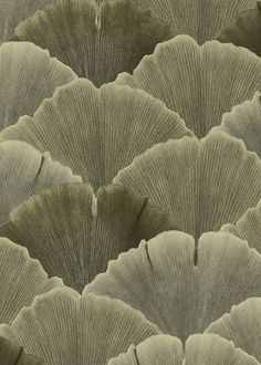 The pattern in Ginko consists of leaves from the ginkgo trees on Hornsgatan in Stockholm. The colors feature different green shades. Leaf Texture, Natural Texture, Earth Texture, Beige Aesthetic, Aesthetic Vintage, Earth Tone Colors, Earth Tones, Patterns In Nature, Textures Patterns