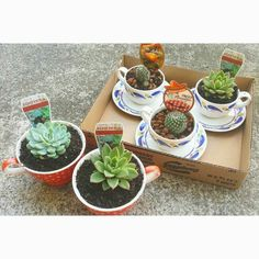 Teapot Cacti - Simply re-pot tiny succulents and cacti into teacups for adorable windowsill ornaments!