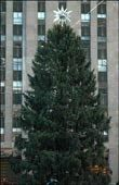 Rockefeller Center Christmas Tree Visitors Guide