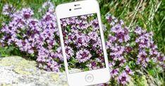 Puutarhan kasvien tunnistaminen - kännykkään ladattavat sovellukset