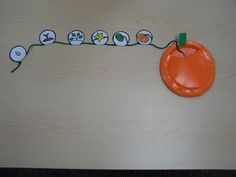 life cycle of a pumpkin activity