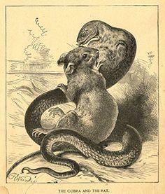 Snake Drawing, Snake Art, Vintage Posters, Vintage Art, Surrealism Drawing, Rat Tattoo, Animal Flow, Maleficarum, Pet Mice