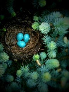 The color robin egg blue is displayed at right. It is a web-safe color and an official Crayola color. In the early 1990s, the crayon was originally included unlabeled in Crayola boxes, and purchasers were asked to submit ideas for the color's name.  Robin egg blue, also called eggshell blue, approximates the shade of the eggs laid by the American Robin.The first recorded use of robin egg blue as a color name in English was in 1873.