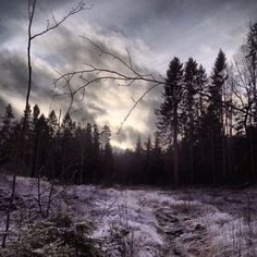 Bleak winter sun Winter Sun, Taking Pictures, Mountains, Nature, Travel, Voyage, Viajes, Traveling, The Great Outdoors