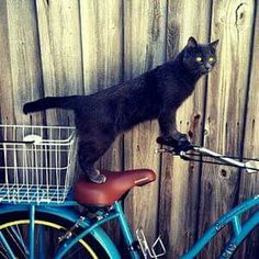 Black kitty on a bike