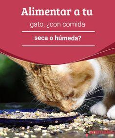 Alimentar a tu gato, ¿con comida seca o húmeda? - Mis animales  ¿Comida húmeda o seca? Te contamos algunas de las ventajas de alimentar a tu gato con estos alimentos. Y tú, ¿qué prefieres para tu mascota?