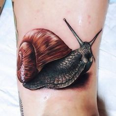 Snail Tattoo #tatts #ink #tattoo