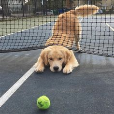 Almost there... When you're too focused on returning serve. Tennis Lifestyle Tennis Professional Tennis Gear Tennis Canada Tennis USA