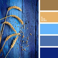 The color palette number 944  beige, blue and blue, brown and blue, royal blue…