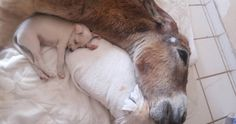 Puppy Comforts Donkey Left For Dead. Heartwarming Photos! - Just Mans Best Friend For Life