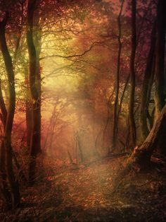 uppermost beautiful light lyrics glare in the forest by arsenixc deviantart on 244