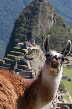 Huayna Picchu, Peru   19 Hikes That Should Never Make Your Bucket List