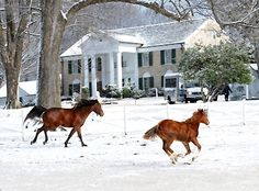 Elvis' horses running in the snow at Graceland. Elvis Presley Graceland, Graceland Mansion, Elvis Presley House, Elvis Presley Family, Elvis Presley Music, Elvis And Priscilla, Lisa Marie Presley, Elvis Cd, Are You Lonesome Tonight
