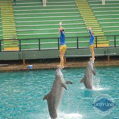 15 Best Miami Seaquarium images   Miami, Sea lions, Coral