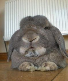 So You Have Come to Old Wise Bunny for Advice? - December 19, 2011