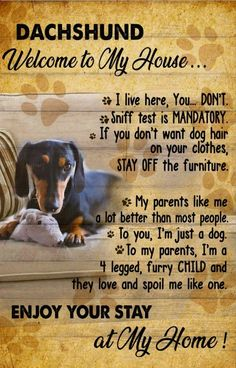 Dachshund Quotes, Dachshund Art, Dachshund Puppies, Dogs And Puppies, Dog Love, Puppy Love, To My Parents, Weenie Dogs, Powerful Words