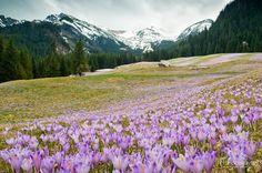 Slovakia V doline jar a na hrebeni ešte zima kraľuje II.