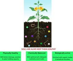 Soils and composting on pinterest compost food webs and for Soil uses and its importance